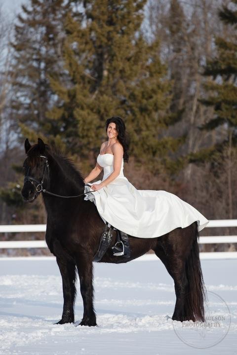 winter_equine_stock_photos-39.JPG