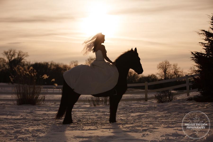 winter_equine_stock_photos-40.JPG