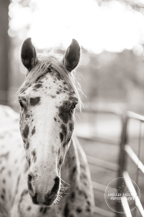 horsephotos-08.JPG