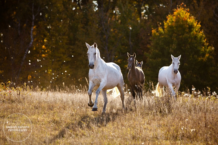 Andalusians Bathed in Late Autumn Sunlight