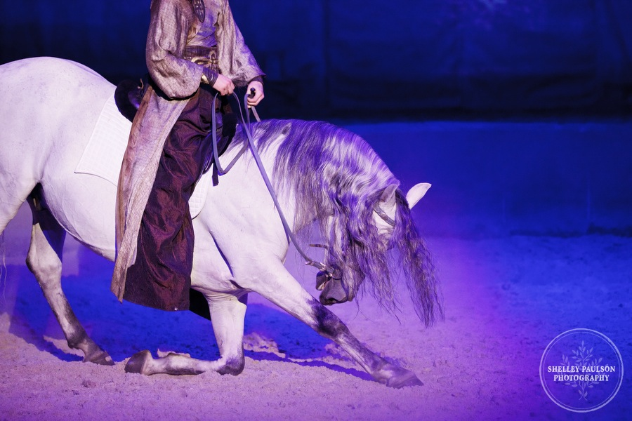 More Photos from Cavalia