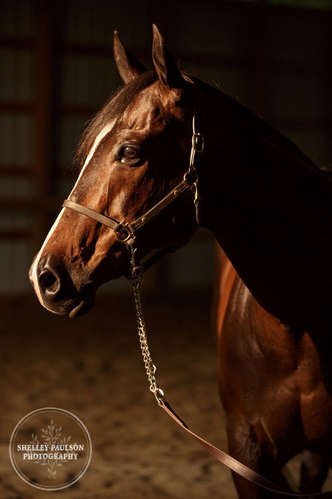 minnesota-horse-photographer-03.JPG