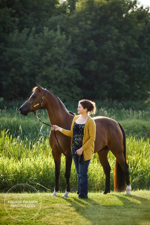 mn-portraits-arabian-horse-03.JPG