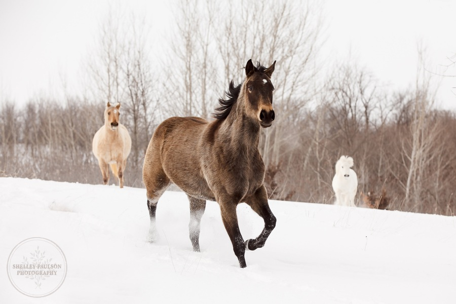 A Sampling of Winter Equine Stock Photos from 2013