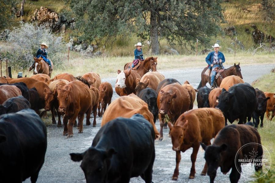 cattledrive05.JPG
