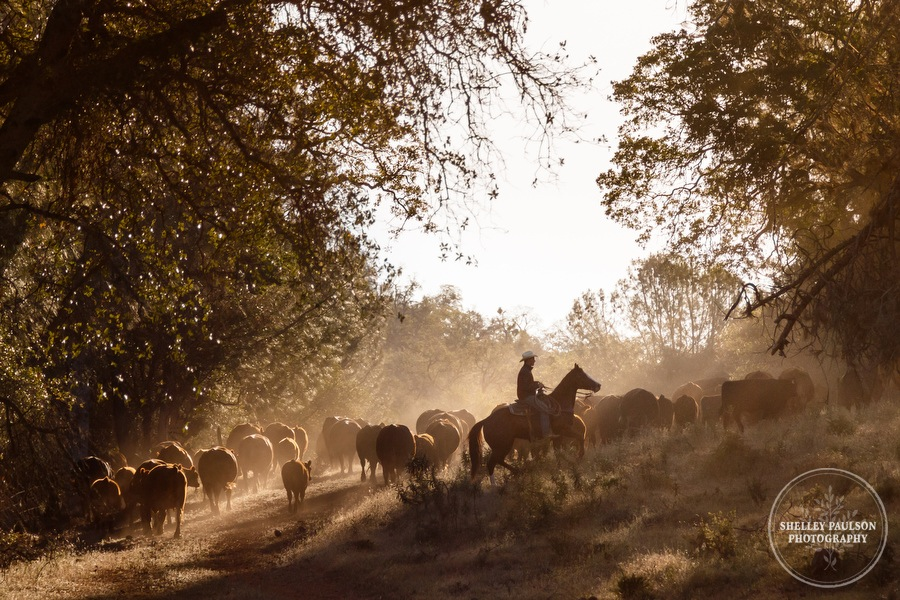 cattledrive11.JPG