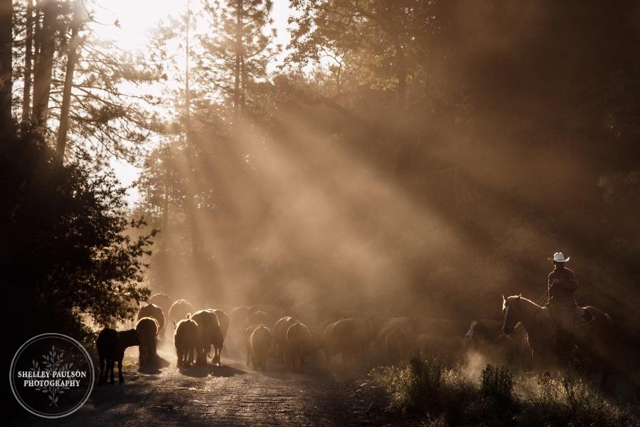 cattledrive20.JPG