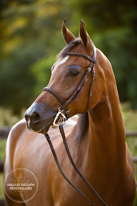 senior-photos-equine-natural-04.JPG