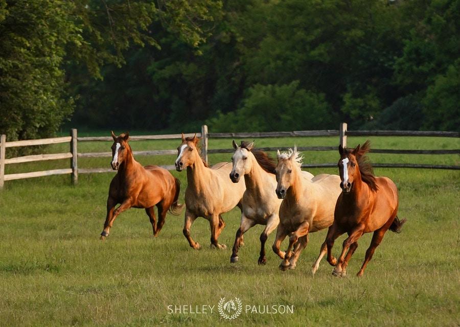 family-photos-with-horses-07.JPG