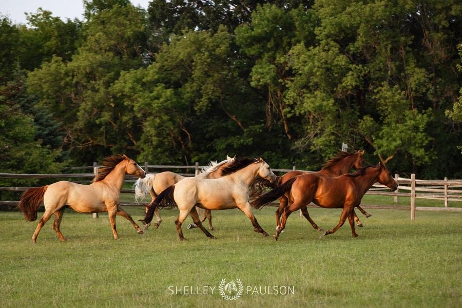 family-photos-with-horses-08.JPG
