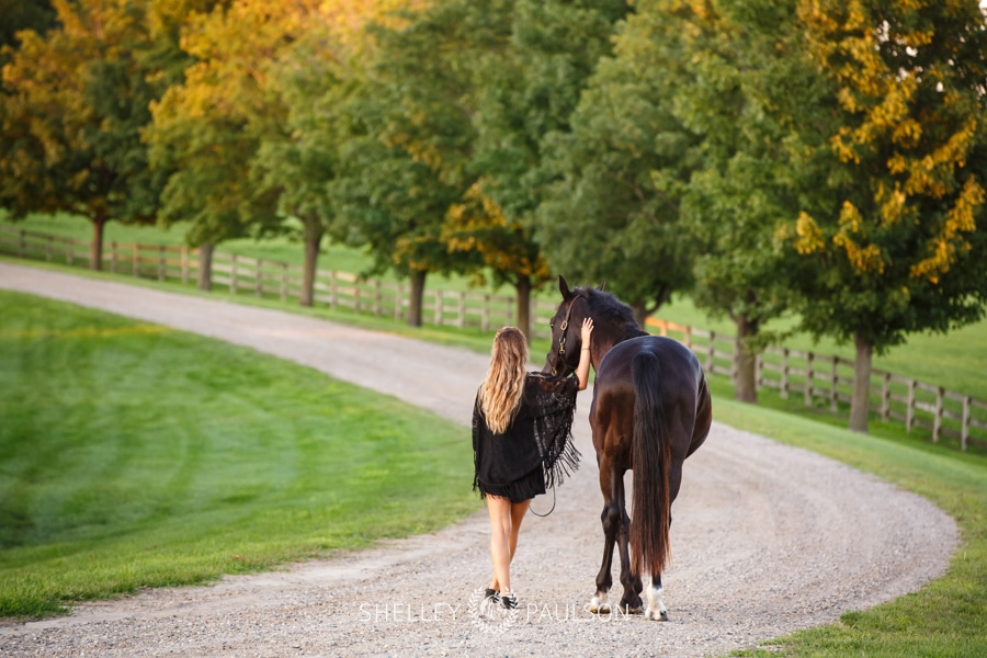 Minneapolis Equine Photographer