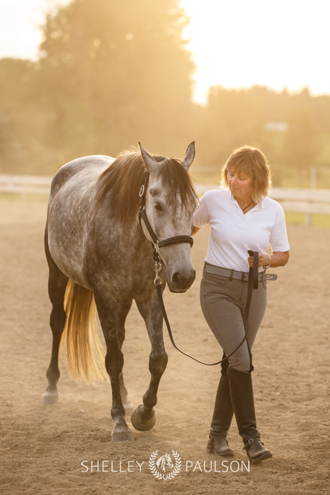 Commercial Equine Photography