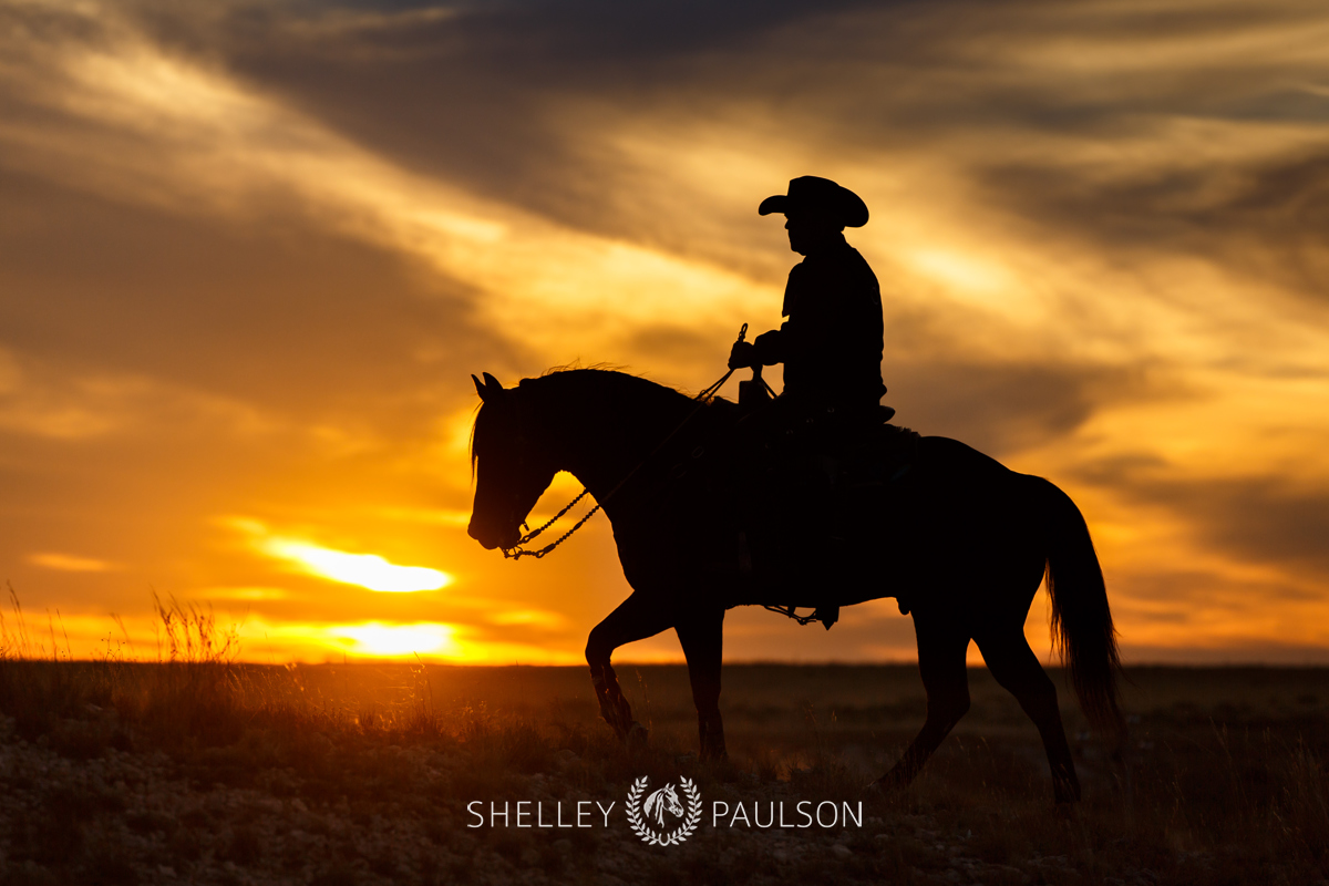 Commercial Equine Photographer