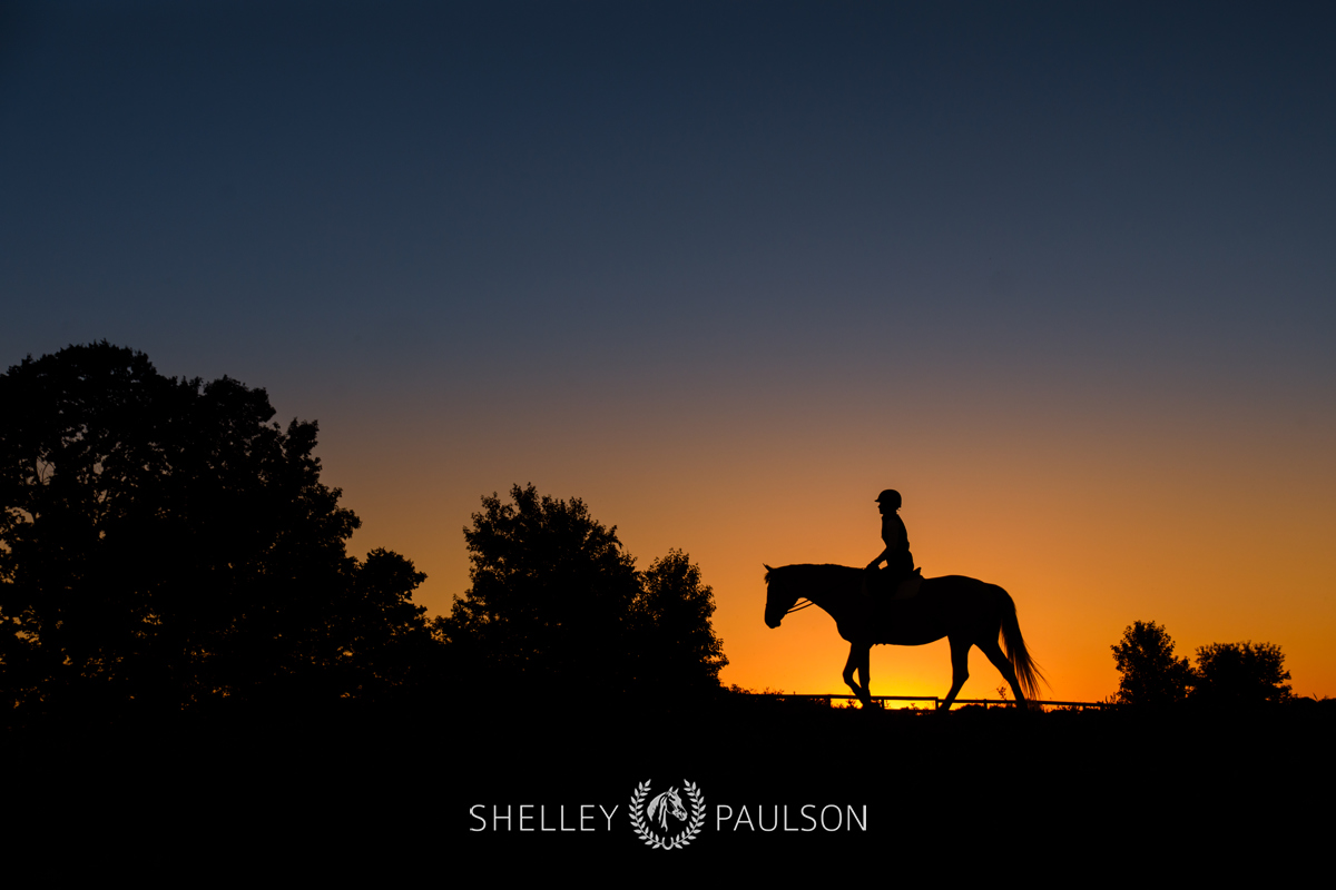 Equestrian Brand Photography
