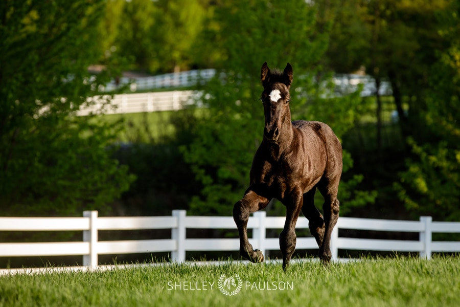 Ames Percherons – Spring