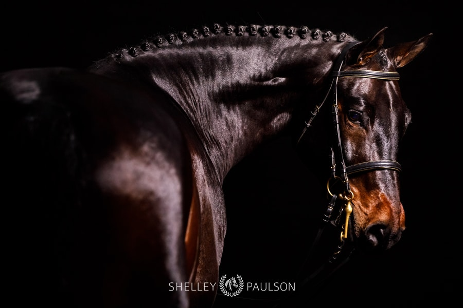 Studio Equine Photos for Pro Elite