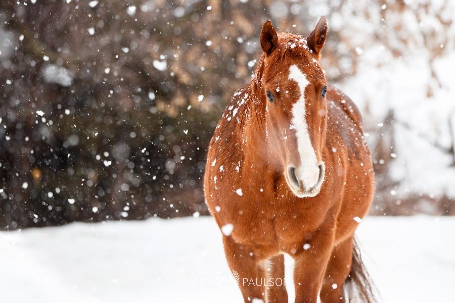 My Horses in Winter
