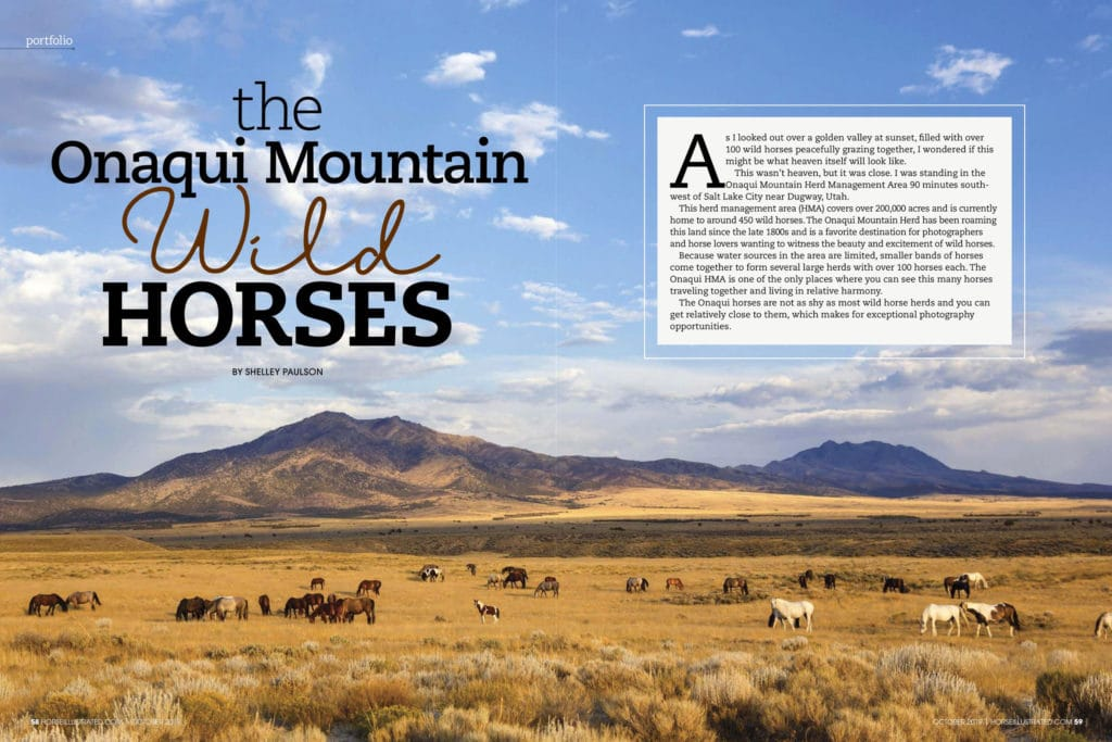 Horse Illustrated Onaqui Mustang Feature