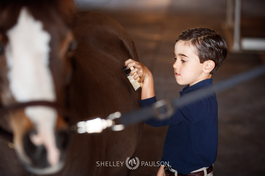 Photo of a boy brushing his horse