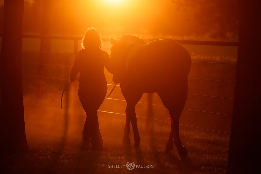 Silhouette Photo of Woman Walking with Horse